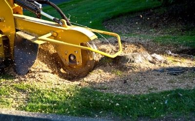 stump grinding services in Slidell