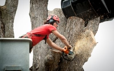 tree removal and trimming in Slidell